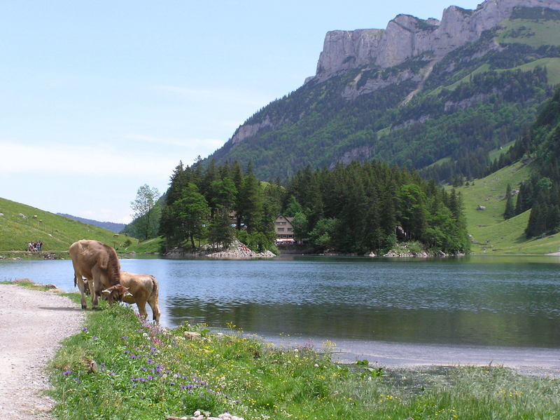 Seealpsee - view towards the two restaurants.