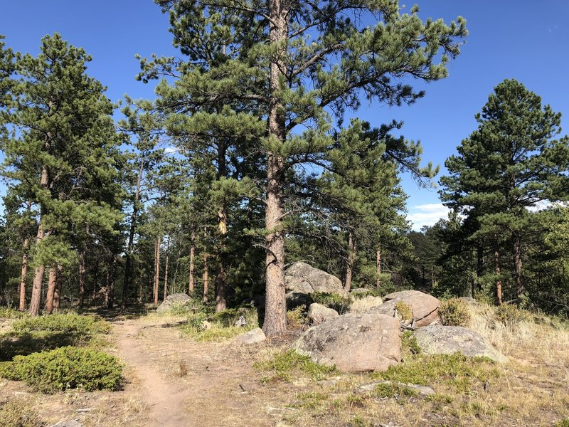 Easy quiet trail