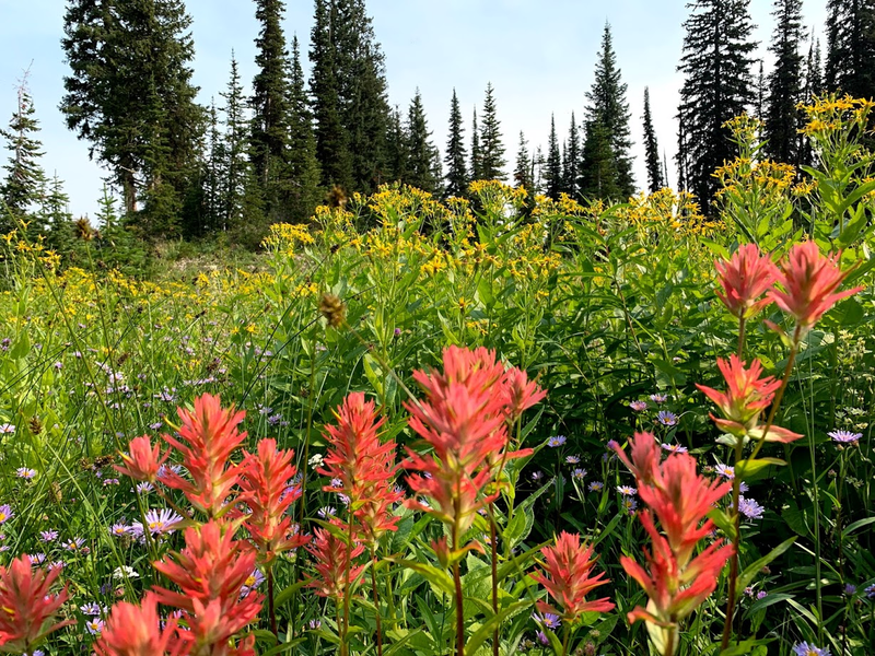 Trail 241 to Dean Lake wildflowers