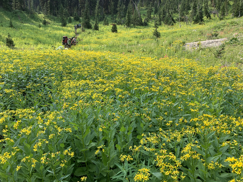 Trail 241 to Dean lake more wildflowers