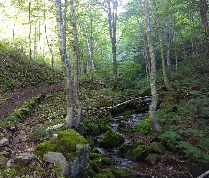 Along the eastern side of the CCW loop. Trail on left, stream on right.