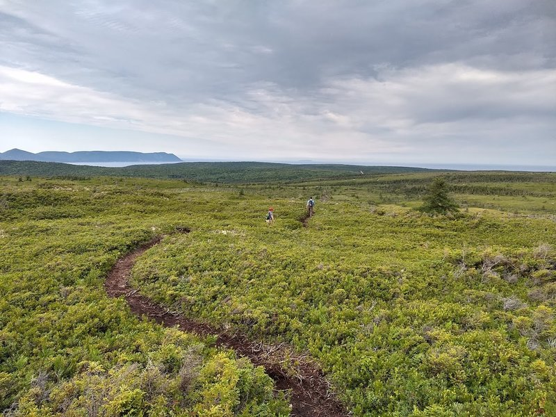 above treeline most of the time. Singletrack, sometimes cut thru the plants' roots.