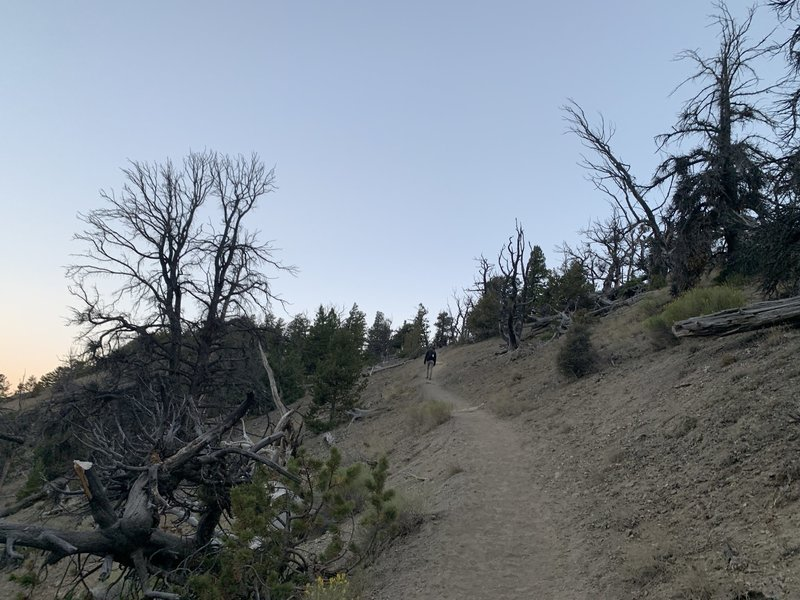 """Around the first mile mark, when the real hiking begins! Did someone way """"switchbacks?"""""""