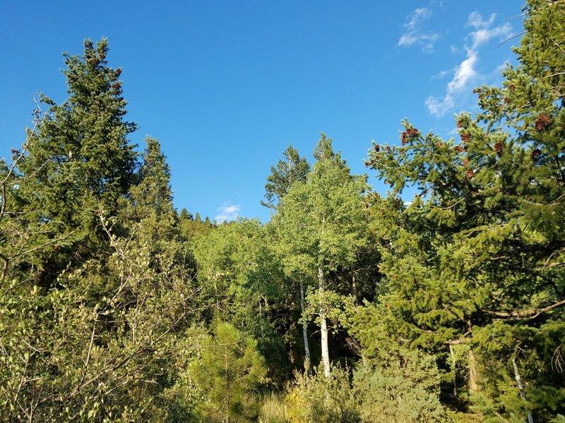 Looking toward Bergen Peak.
