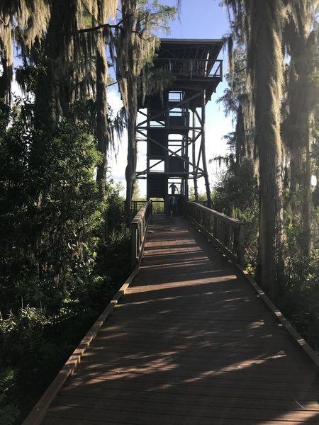 At the end of the trail is a stair climb to overlook the swamp.