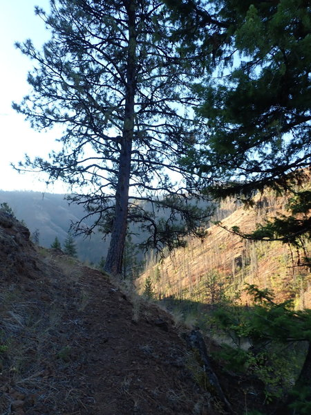 View from the switchbacks towards the end of the trail.
