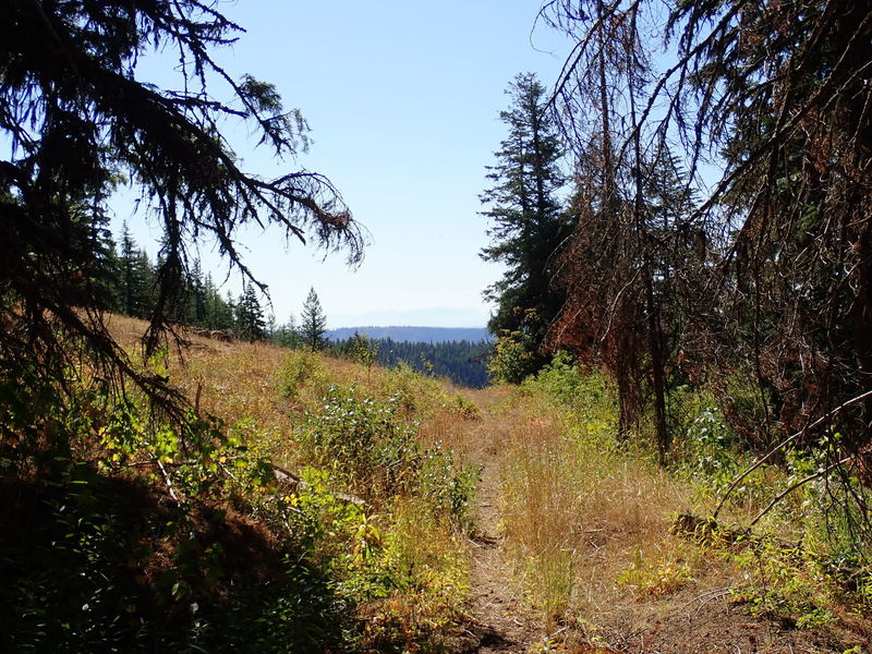 Trail opening up to meadow.