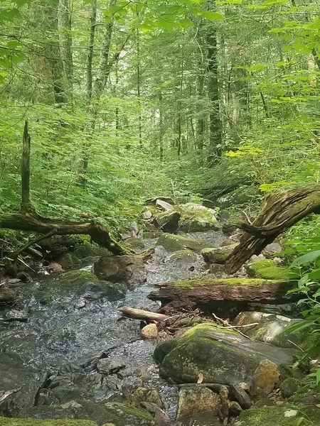 A stream along the trail.