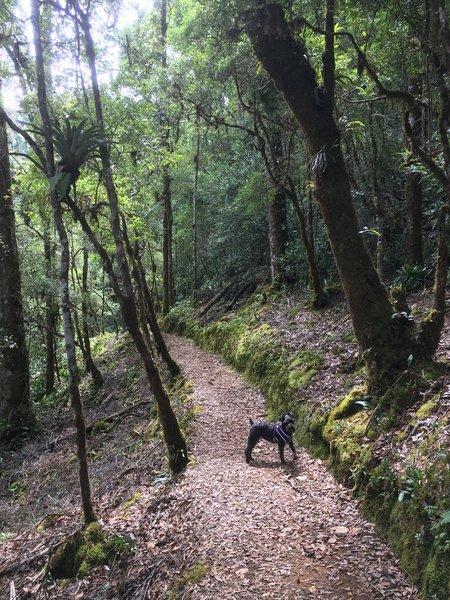 Dog hiking companion shows the way.