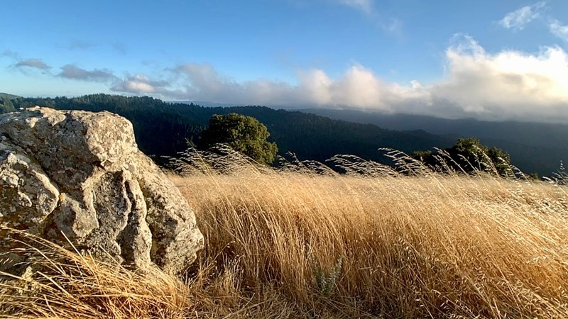 A handful of minutes off of Hickory Oaks Trail, you'll find the humble Turtle Rock. Venture here at the right time of day, and the sun will reward you with grass ablaze and gilded treetops … before the famous low clouds descend to test your rain jacket.