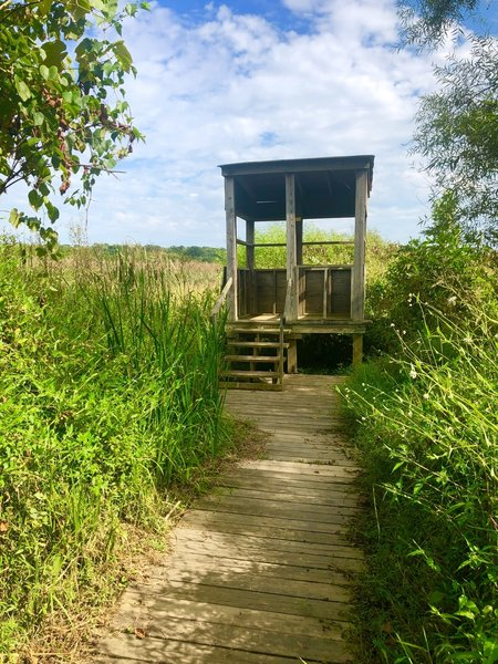 Hut marking the end of the Great Blue Heron Trail where you can look out into the marsh.
