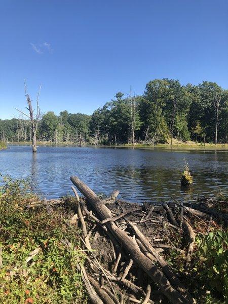 Beautiful beaver dam.