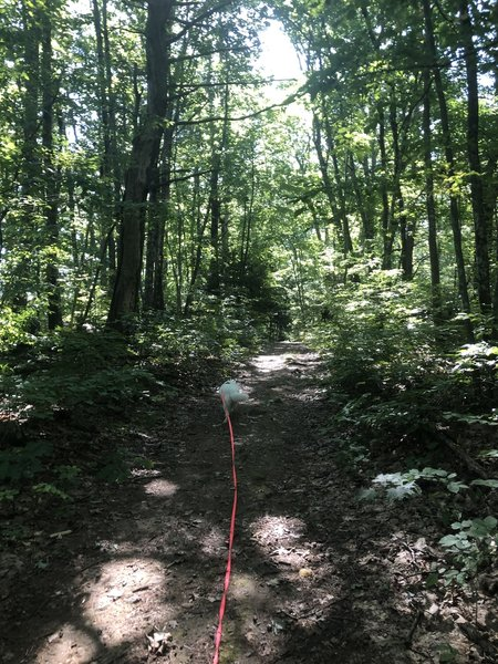 My dog Luna on her long leash (dogs are allowed off leash though).