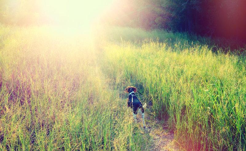 Path to sunlight