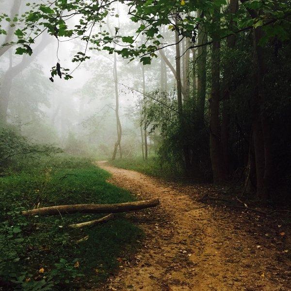 Morning Choice on a foggy morning