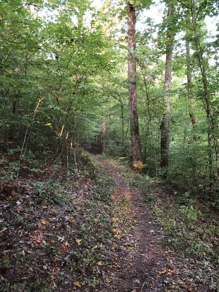 Right after the initial descent, the trail starts to wind through the trees.