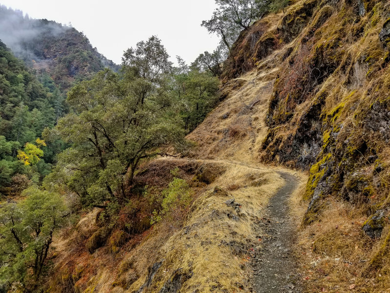 The Rogue River Trail as it hugs the rocky canyon walls covered in lush green moss.