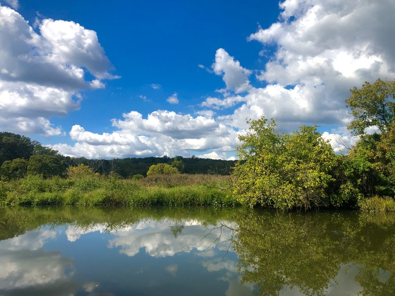 Beautiful reflections looking across Accotink Creek from the Great Blue Heron Trail.