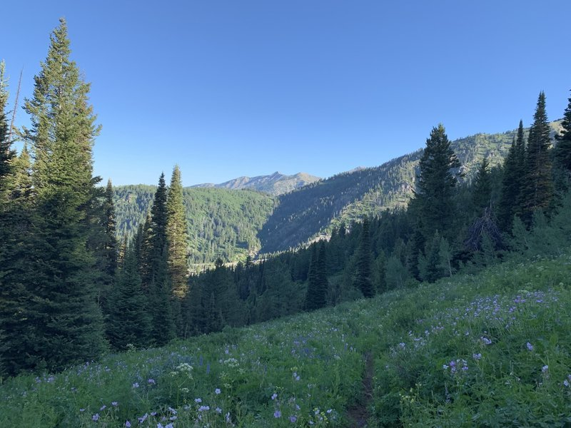 Just before Spaulding Basin and looking back down the trail behind you.