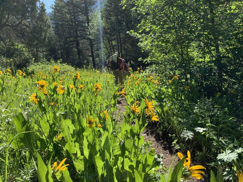 Wildflowers in bloom on the Dry Canyon trail.