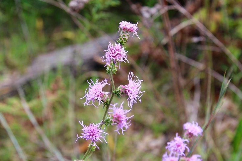 Hair string purple flower