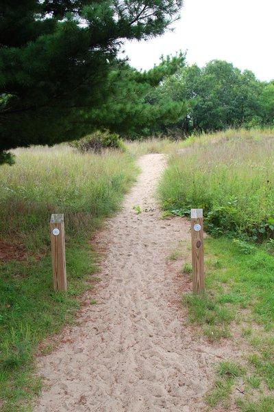 Begin of Dune Ridge Trail