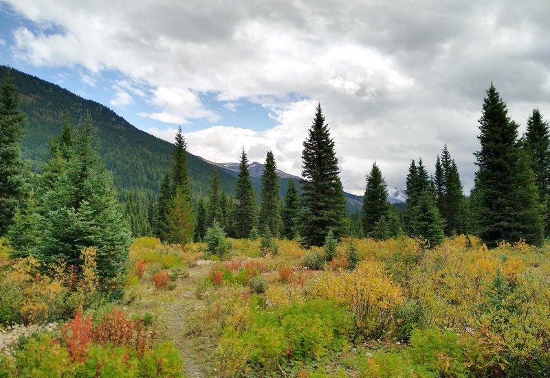 Mountain views and early fall color along the David Thompson Heritage Trail near Howse Pass