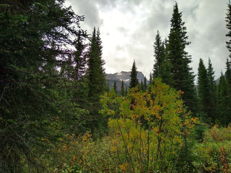 Mount Conway can be glimpsed through the trees near Howse Pass, from the David Thompson Heritage Trail.