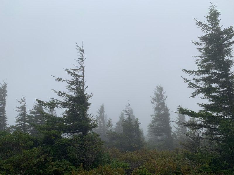 Trees near Bear Rocks