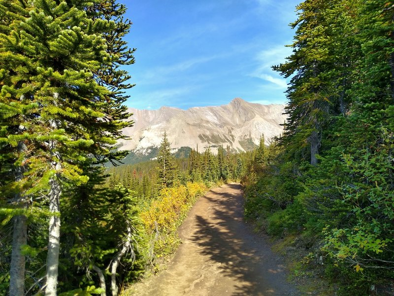 Parker Ridge Trail starts off in the thin fir forest with mountain views.