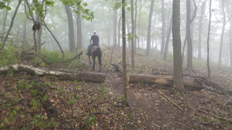 Reaching the summit of Sugarloaf Mtn. Three horses & riders found the 2.2 mile trail quite challenging, yet beautiful. Much steeper than anticipated, the trails had washed gullies & many tree roots & a few downed trees to negotiate. Not for green horses.