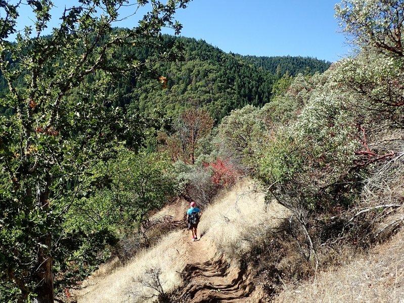 Along the Rattlesnake Gulch Trail