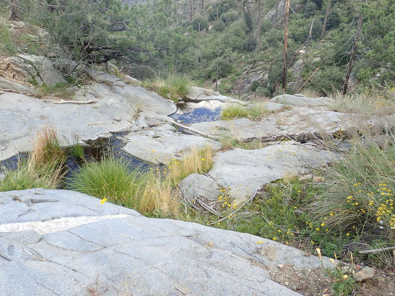One of several springs along the Crystal Springs portion of the AZT Passage 11b trail.