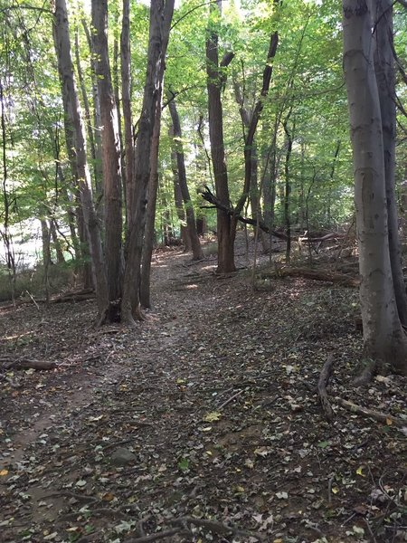 Typical terrain found in the first tenth of a mile ...
