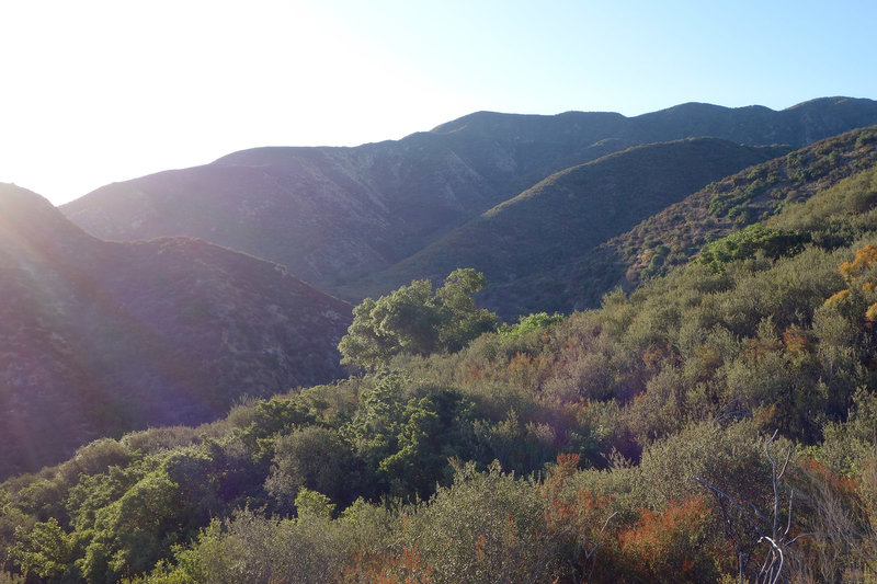 Early light on the Wild Horse Trail