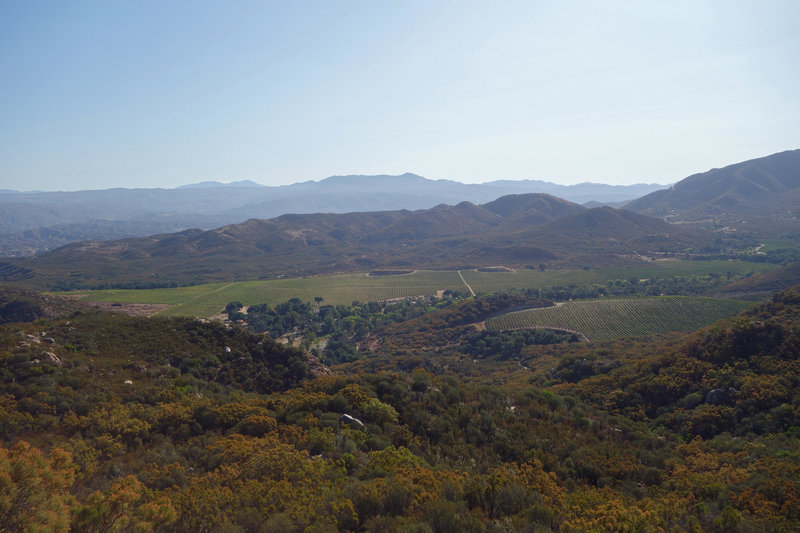 Vineyard to the east of the Wild Horse Trail