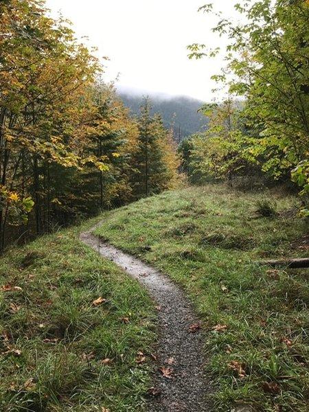 Break in the trees on Greywolf Trail