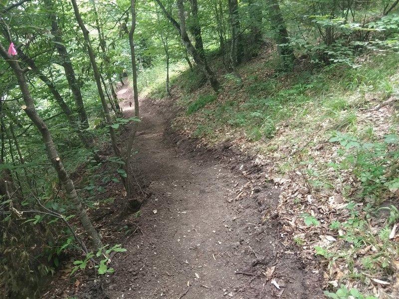 Freshly cut segment of the trail