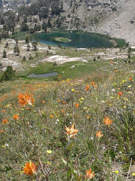 Wildflower bloom above Island Lake.