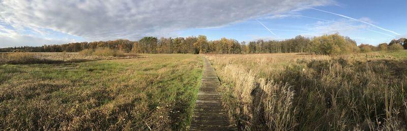path through the heath