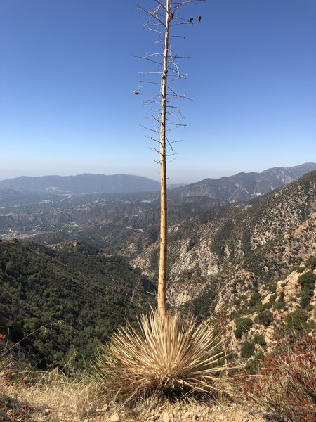 The highest point on this trail