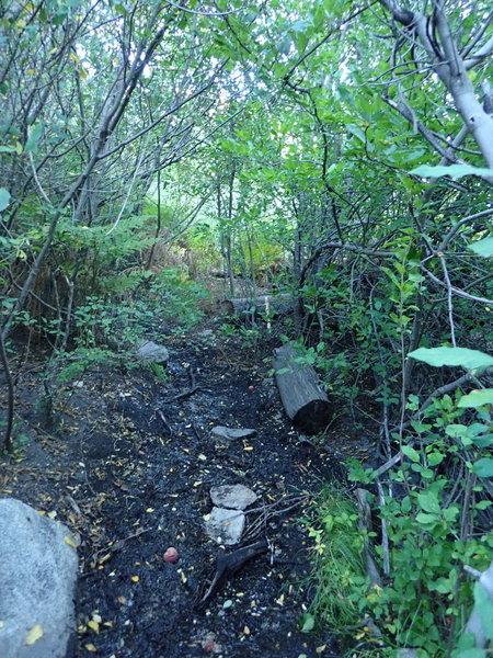 Mud Springs along the Palisades #99 trail