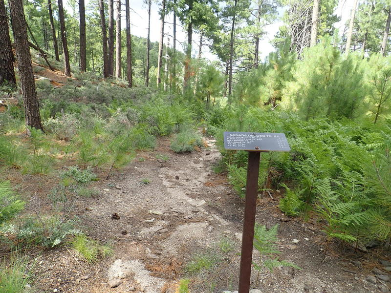 The trailhead  for the Canada Del Oro trailhead at the junction of the Samaniego Ridge trail.