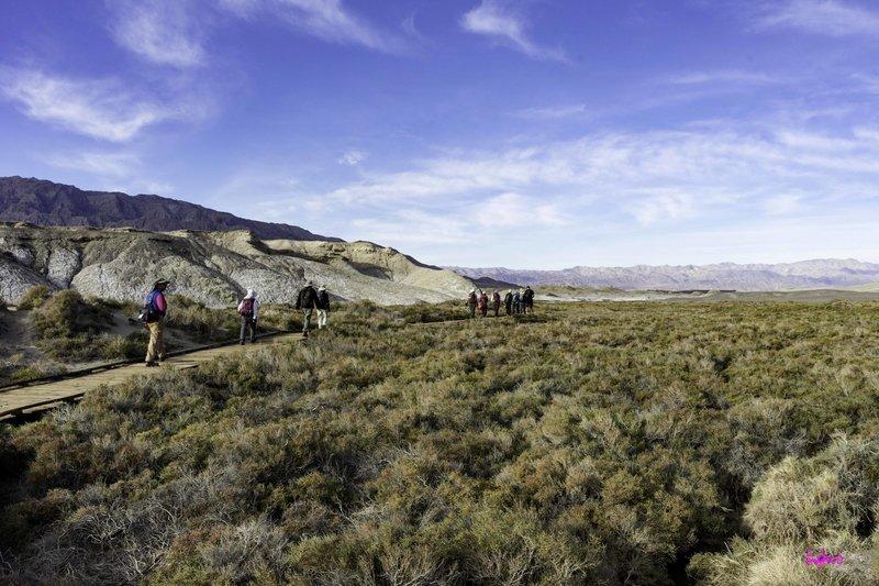 Death Valley Salt Creek