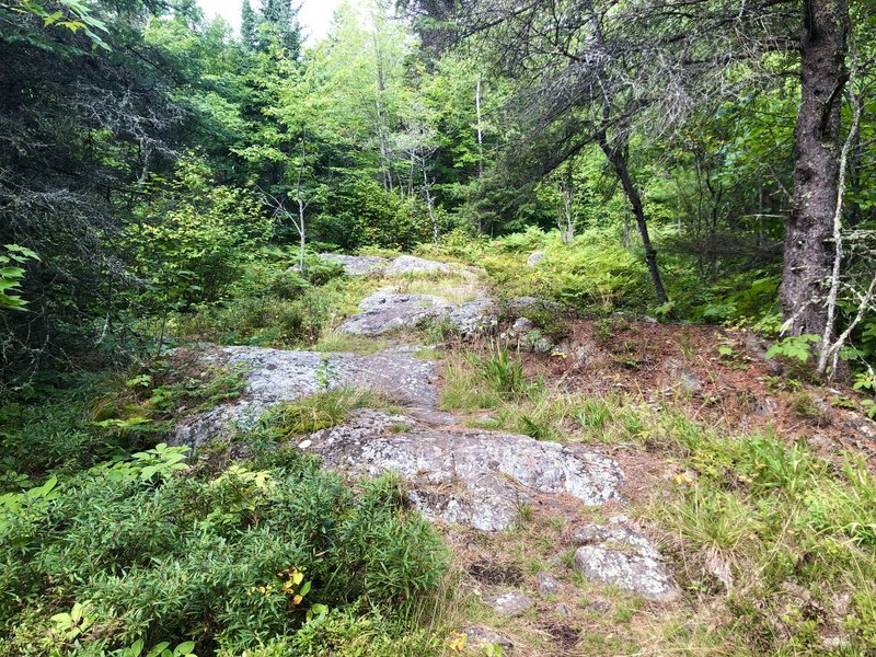 Rock outcroppings intermittently guide you along the Locator Lake trail.