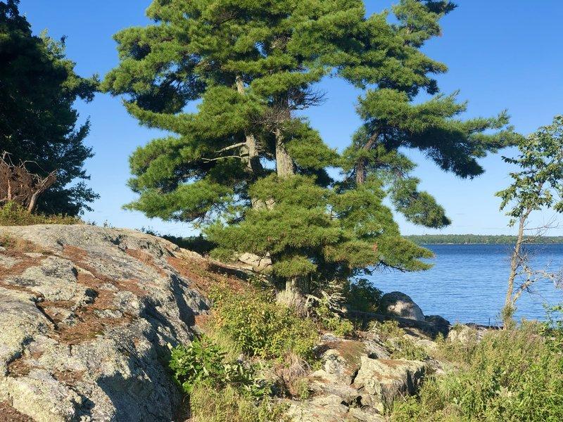 One of the islands on Kabetogama lake.