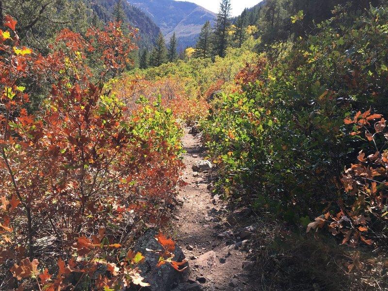 Gradual descent down No Name Trail