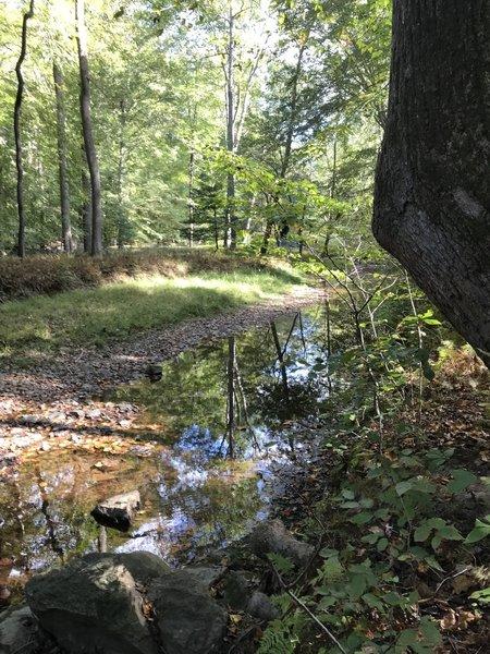 The trail follows the Quantico Creek