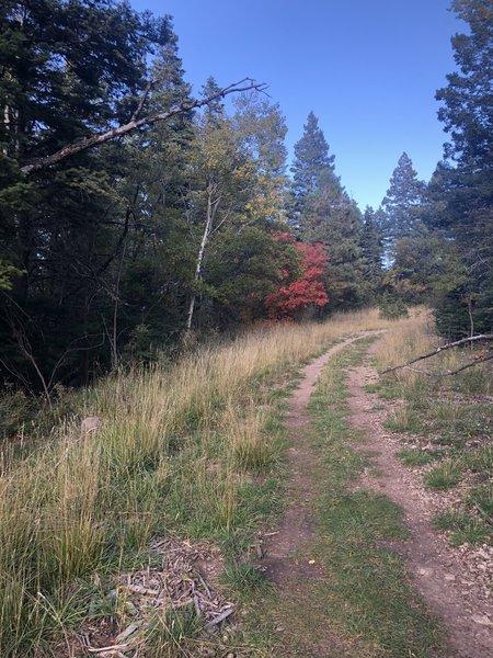 Pine Trail South T568