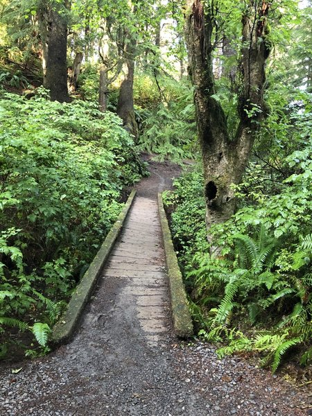Awesome lil bridge on the trail
